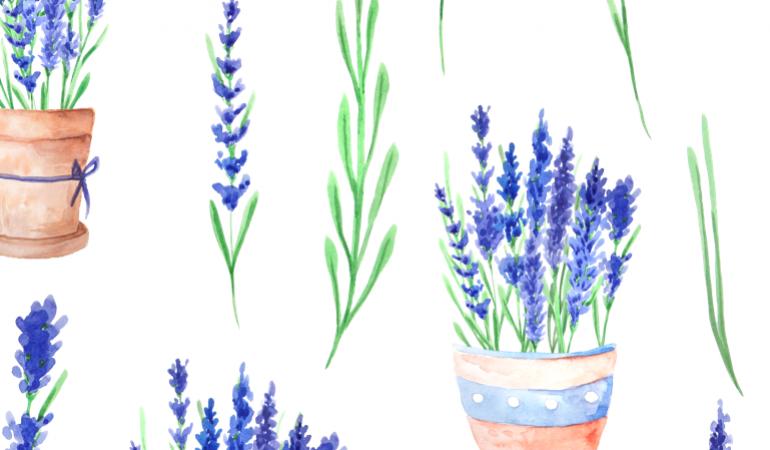 Bộ hoa lavender tách nền PNG rất đẹp dùng làm tư liệu ghép hình, 516family.com kho đồ họa miễn phí